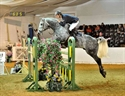 Mark Bun ting in Foxhunter Final Arena Uk 2010 on Davidoff Van Overis