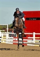 Galant Under Kurtis Malik clear at Arena Uk Jumping Championships 2010