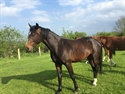 Diehard UK stunning colt for sale